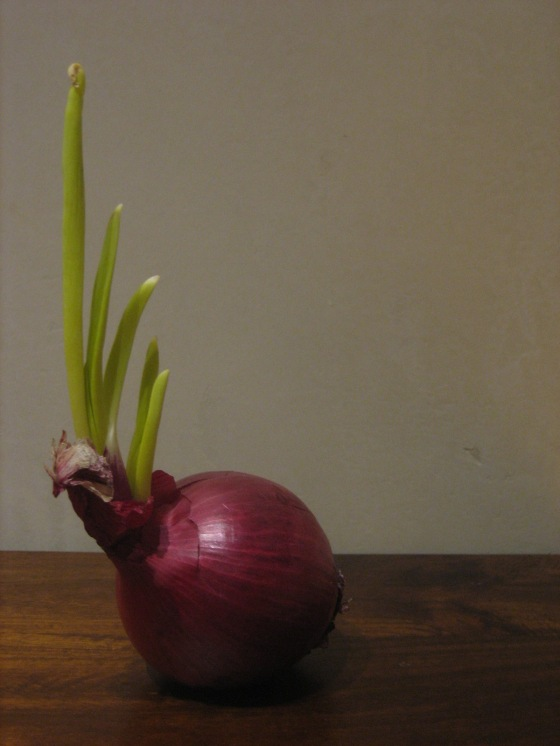 Red Onion with a Mohawk
